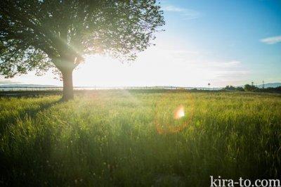 太陽の光で夜泣き対策