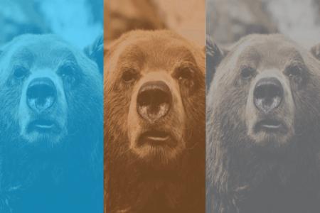 目のクマの種類の見分け方