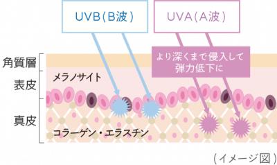紫外線A波、B波