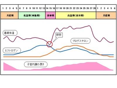 排卵周期グラフ